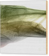 X-ray Of Muskie Wood Print