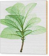 X-ray Of Tobacco Wood Print