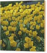 Yellow Tulips 2 Wood Print