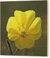 Yellow Wild Flower Wood Print