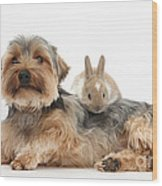 Yorkshire Terrier Dog And Baby Rabbit Wood Print