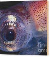 Firefly Squid Wood Print