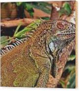 Iguana Lizard Wood Print