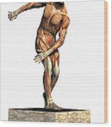 Male Musculature Wood Print