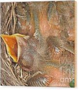 Newborn Robin Nestlings Wood Print