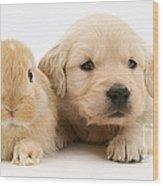 Rabbit And Puppy Wood Print by Jane Burton
