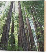 Redwoods Sequoia Sempervirens Wood Print