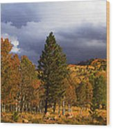 Rocky Mountain Fall Wood Print by Mark Smith