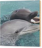 Atlantic Bottlenose Dolphins Wood Print