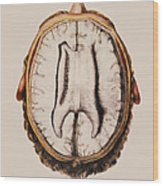Brain Anatomy Wood Print