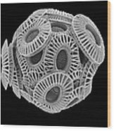 Calcareous Phytoplankton, Sem Wood Print by Steve Gschmeissner