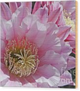 Pink Cactus Flowers Wood Print