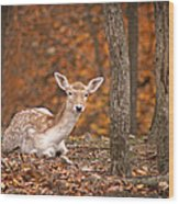 1111-7638 Fawn In Fall Wood Print