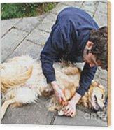 Dog Grooming Wood Print