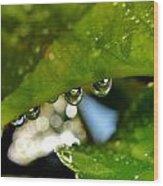 Raindrop On Leaf Wood Print