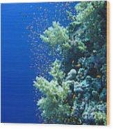 Underwater Landscape Wood Print