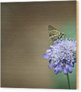 1205-8785 Skipper On A Butterfly Blue Pincushion Flower Wood Print by Randy Forrester