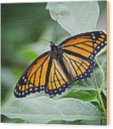 1205-8934 Monarch In Spring Wood Print by Randy Forrester