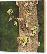 1209-0859 September Tease Wood Print by Randy Forrester