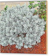 Flowers Flowers And Flowers Wood Print