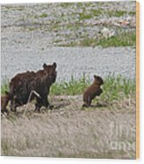 Black Bear Family Wood Print