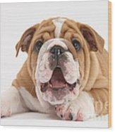 Bulldog Pup Wood Print