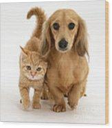 Kitten And Puppy Wood Print by Jane Burton