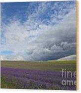 Lavenders Wood Print
