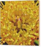 Pincushion Blossom Wood Print
