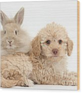 Puppy And Rabbit Wood Print