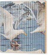 Seagulls Wood Print by Debra  Miller
