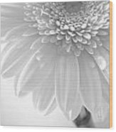 1491c4 Wood Print