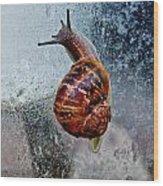 Garden Snail Wood Print