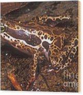 Harlequin Frog Wood Print