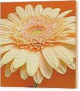 1521-003 Wood Print