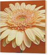 1521c-001 Wood Print