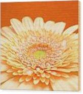 1523-001 Wood Print