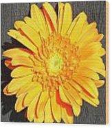 1599-001 Wood Print