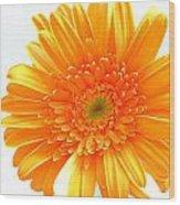 1609-001 Wood Print