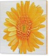 1695c-002 Wood Print