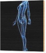 Female Anatomy, Artwork Wood Print