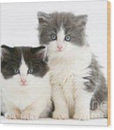Kittens Wood Print