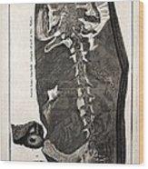 1726 Scheuchzer Homo Diluvii Testis Wood Print