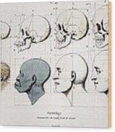1760a Petrus Camper Facial Angle Eugenics Wood Print
