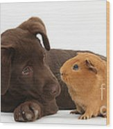 Puppy And Guinea Pig Wood Print by Mark Taylor