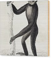 1833 Jardine Hylobates Hoolock Gibbon Wood Print