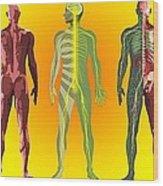 Human Anatomy ,artwork Wood Print