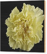A Carnation Dianthus Caryophyllus Wood Print