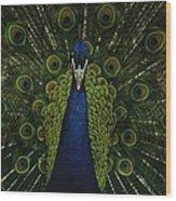A Male Peacock Displays His Beautiful Wood Print