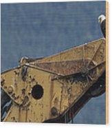 A Northern American Bald Eagle Wood Print